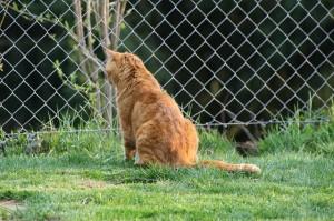 Maschendrahtzaun in der Tierhaltung