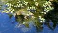 frog-929370_640© Couleur - Pixabay.com