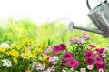 Blumen gießen im Garten