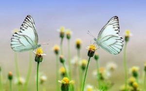 Wiese mit Blumen und Schmetterlingen